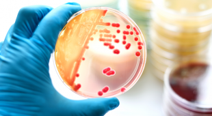 Importance of Bacteria